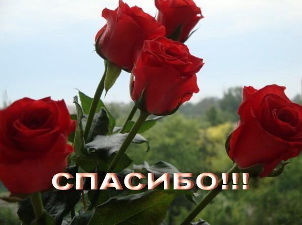 Открытки спасибо большое с розами