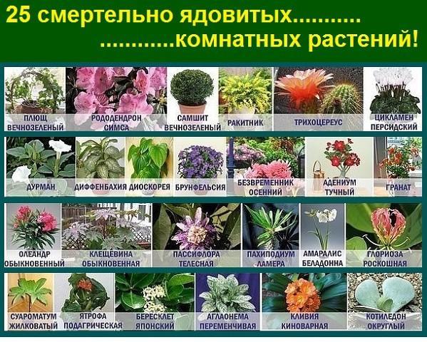 Перечень цветов комнатных 138
