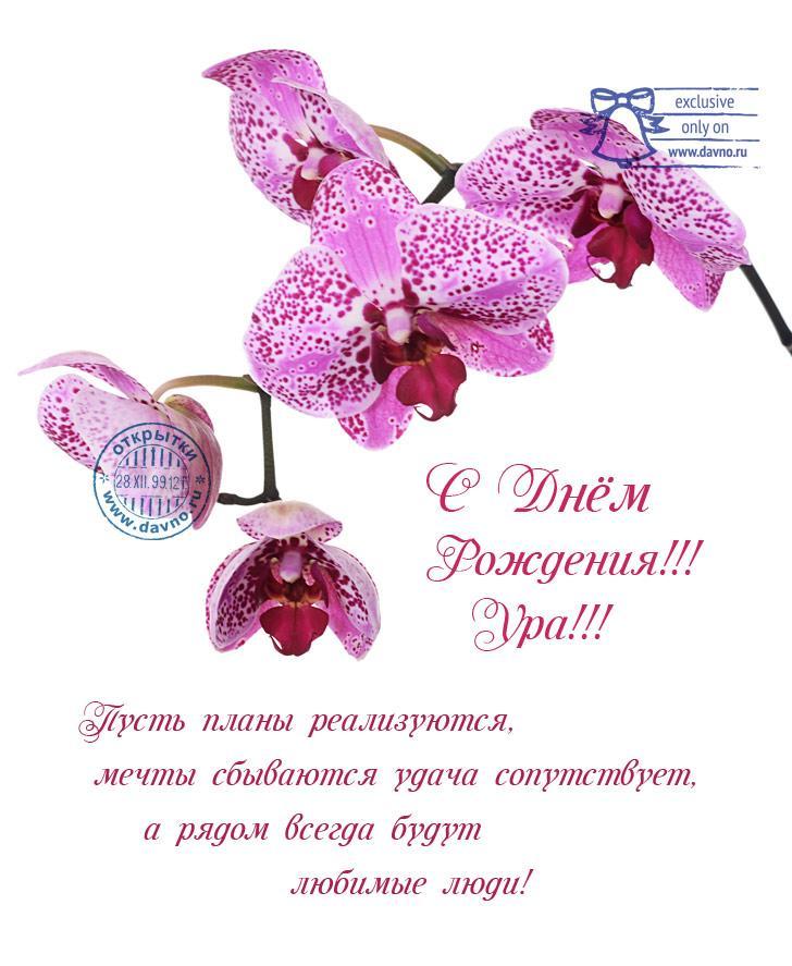 Поздравления цветок орхидеи