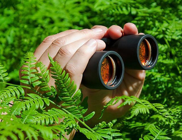 Подглядывание в кустах