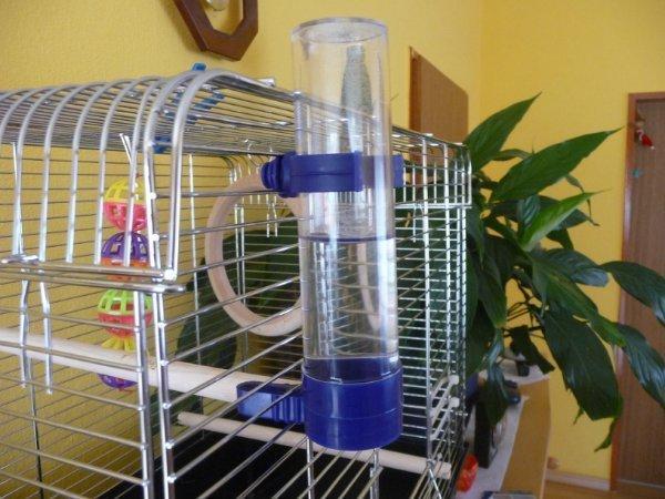 Как сделать поилку для попугаев