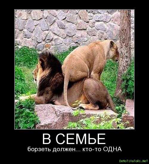 Прикольные фото отдыхающих животных