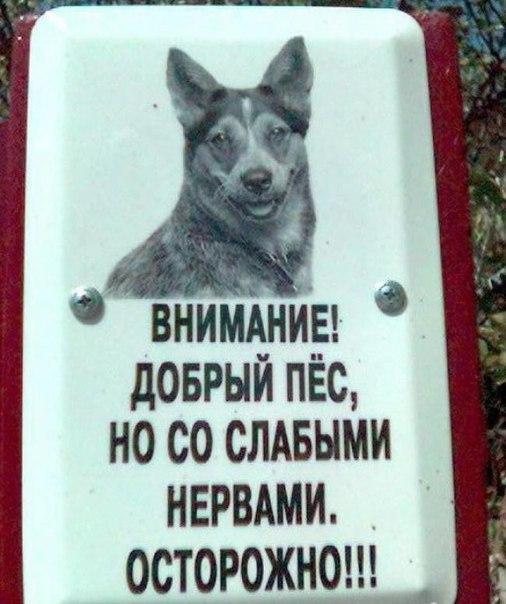 Собака злая а кот вообще дебил