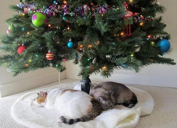 Les beaux sapins de Noël 3b944