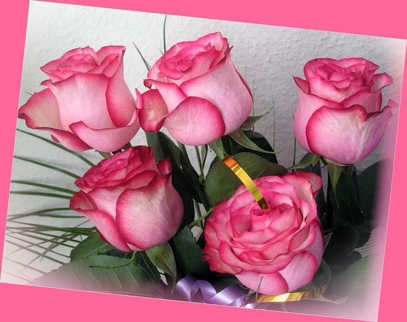 Поздравления с днем рождения женщине красивые в стихах и картинках любови, картинки анимашки животных