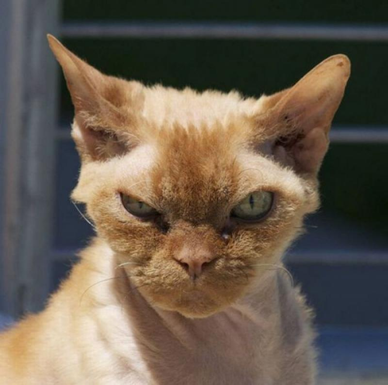 Как сделать кошку ласковой если она злая