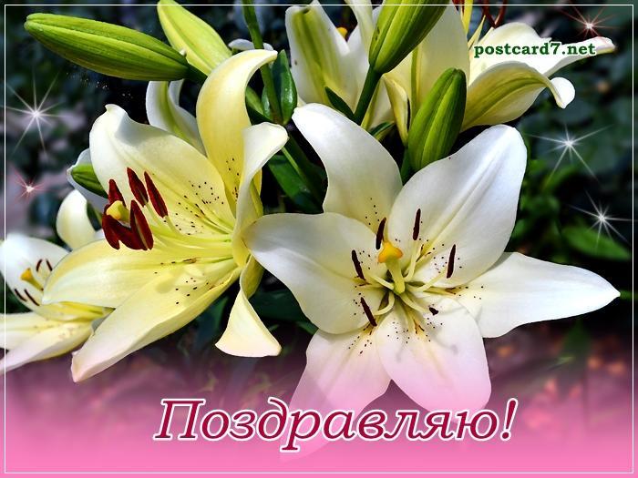 Поздравительные открытки с днем рождения с цветами лилии