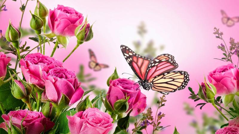 картинки на рабочий стол цветы самые красивые № 516995 без смс