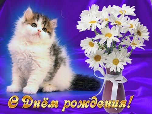 Поздравления картинки с кошками с днем рождения