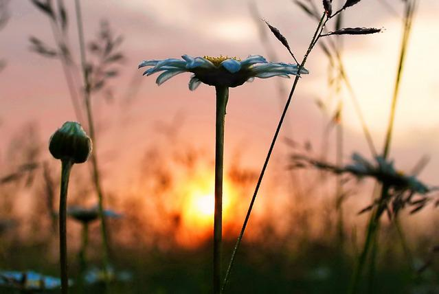 Скачать песню роса рассветная
