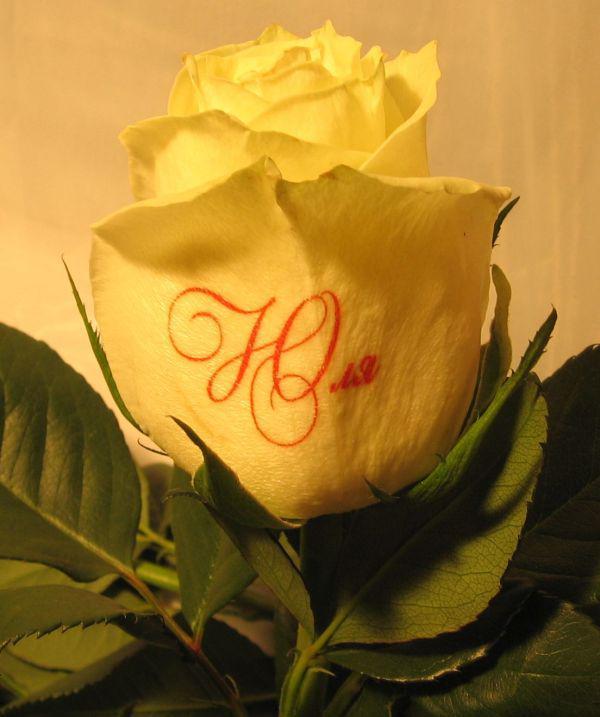 картинки с цветами для юлии сети частенько можно