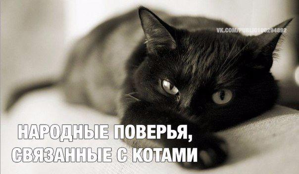 Мужчина любящий котов