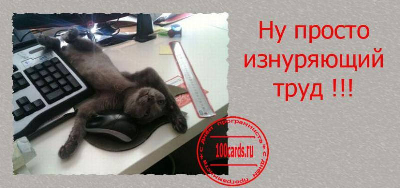 В россии сегодня отмечают день программиста