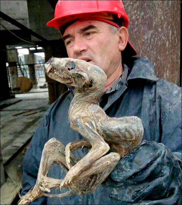 Находка сибирских шахтеров напоминает дьяволенка
