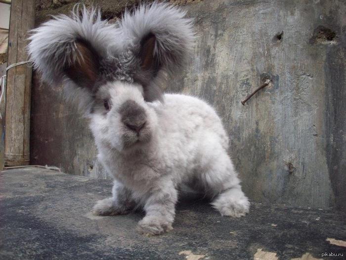 знакомьтесь это валли кролик