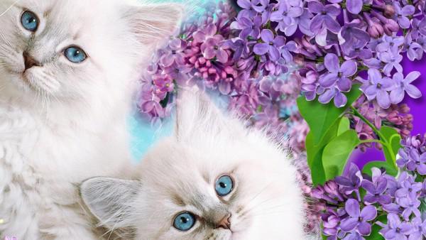 природа животные кот белый без смс
