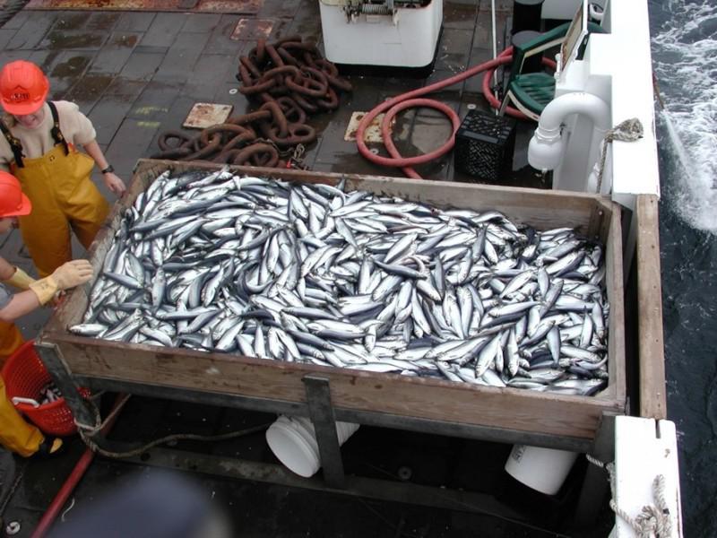 рыбная ловля на поставки