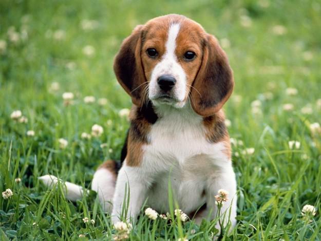 породы собак с фотографиями кане