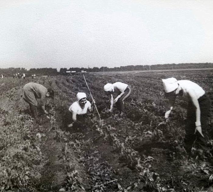 фото битва за урожай большинстве случаев