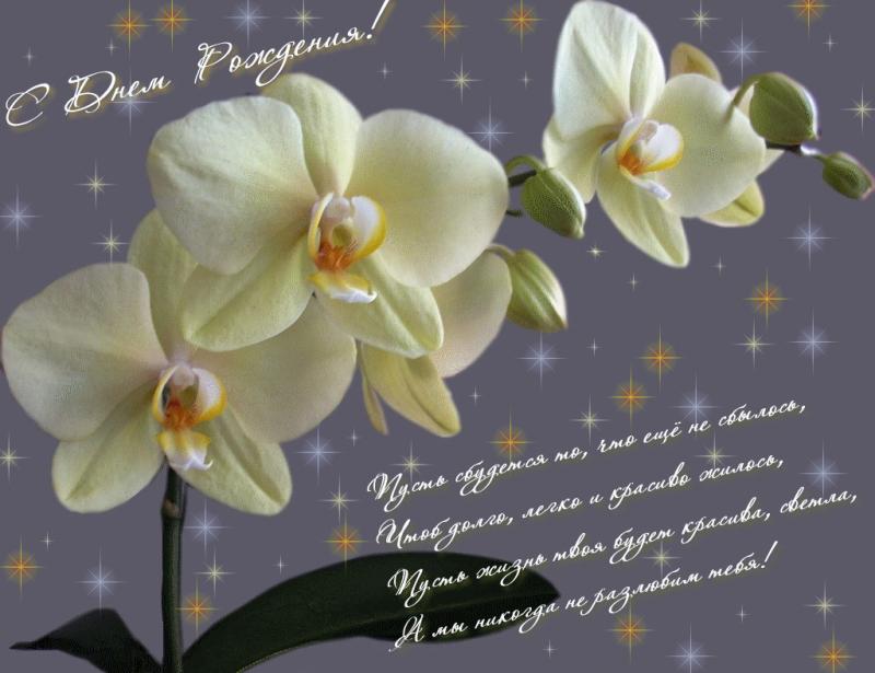 Открытки с орхидеями с днем рождения женщине