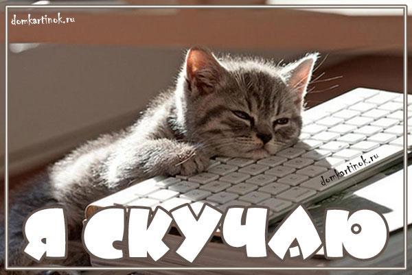 Котики с надписью скучаю, юбилеем
