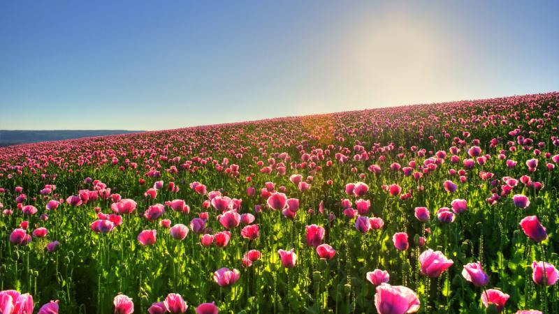 картинки на рабочий стол природа цветы № 516406  скачать