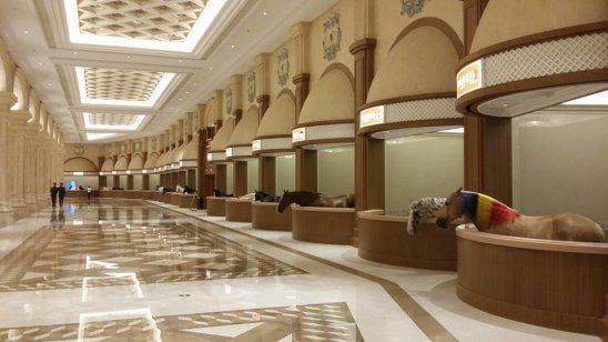 Конюшня в Дубае Разговоры обо всем Отношения жизнь