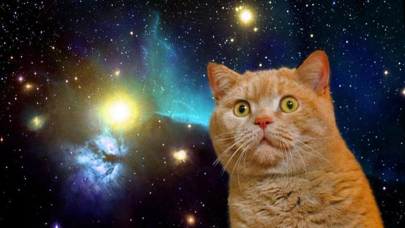 обои на рабочий стол космос коты № 2287999 загрузить