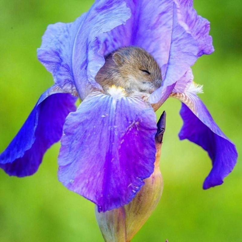может картинка спящего цветка свадебная фотосессия