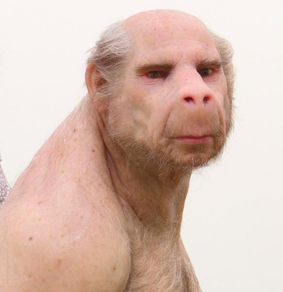 """""""Їдять персики та яблука. Перебігають з ділянки на ділянку. І нічого зробити не можна"""", - 9 мавп, які втекли із зоопарку, тиждень гуляють дачним кооперативом на Одещині - Цензор.НЕТ 2265"""