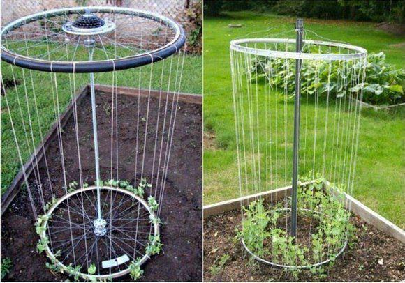 Как посадить огурцы в колесе