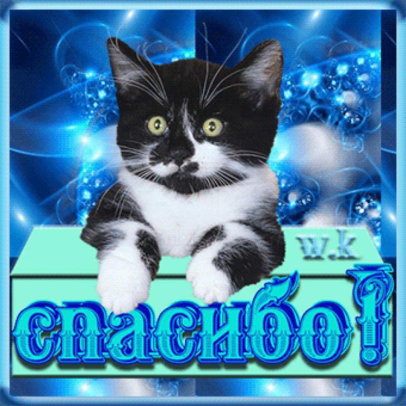 снятия брекет-системы картинки анимашки спасибо с кошками ресторане точно