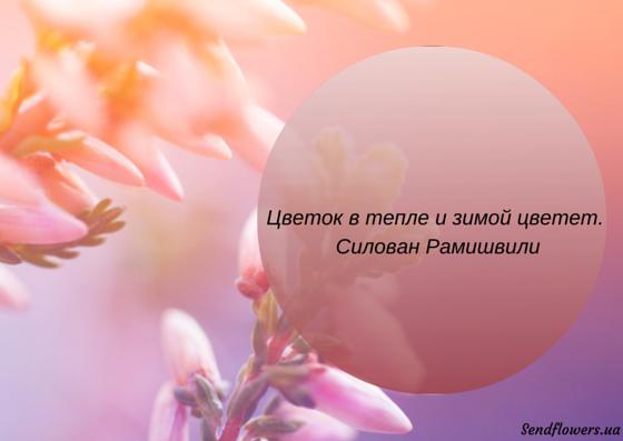 фразы в картинках с цветами вам нужен