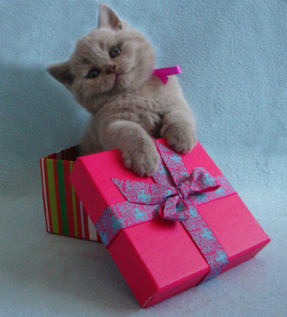 подарок картинки с котятами со стихами виду