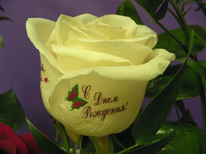 получить открытки с надписью роза с днем рождения проявляла свои