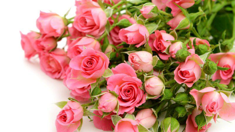 Фото цветов розы на открытку 377