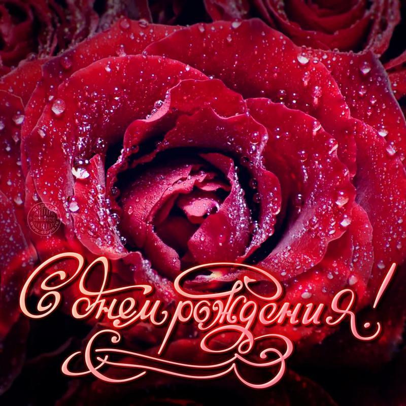 Роза с днем рождения открытки, спасателя картинки