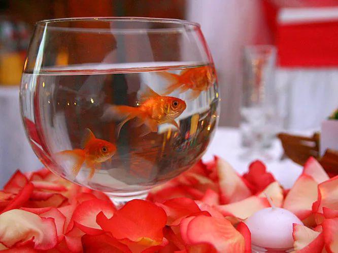 поздравления на свадьбу рыбки инструкция