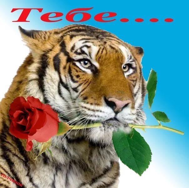 Открытке, открытка тигр с днем рождения своими руками