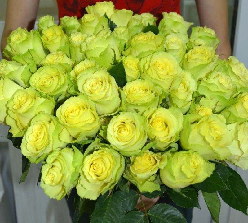 Букет роз зеленых фото
