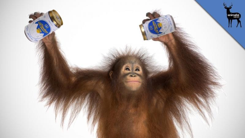 Картинки с пьяными животными прикольные