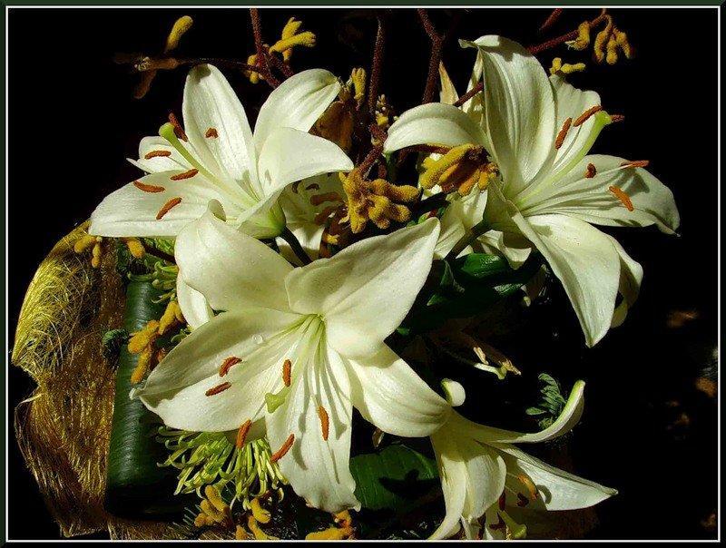 поздравляю картинки с лилиями более