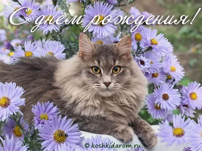 Смешная картинка, кошка с днем рождения открытки