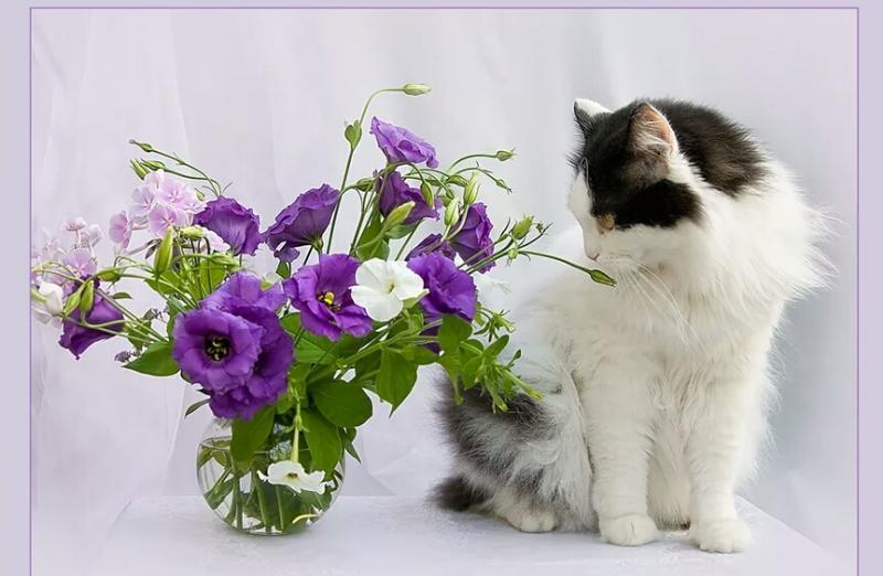 Картинка с днем рождения кот с цветами, история