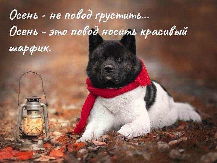 https://kak2z.ru/my_img/img/2021/09/14/91cdb.jpg