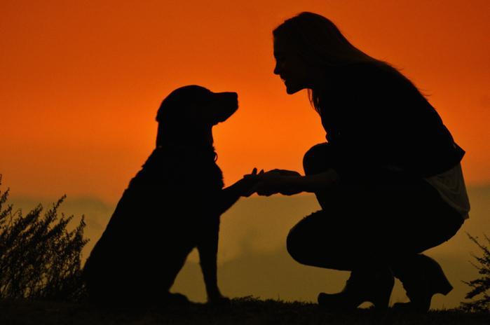 Иногда после разговора с человеком хочется дружелюбно пожать лапу собаке, улыбнуться обезьяне, поклониться слону