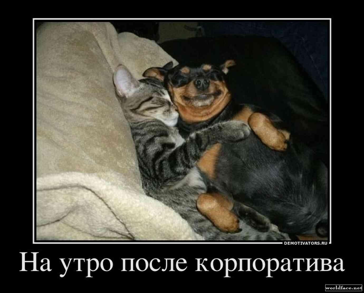 You tube котоматрица картинки животные 2
