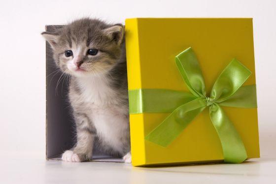 Подарки с котиками на день рождения