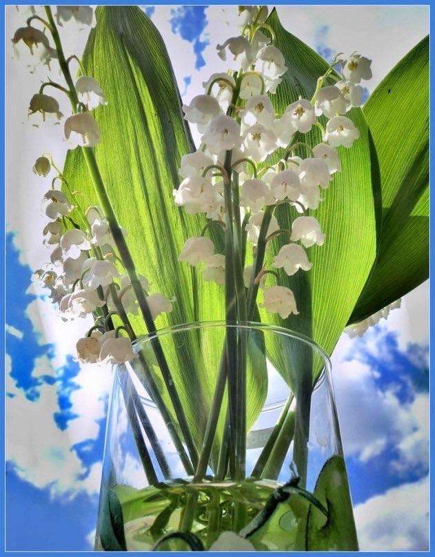 Открытка на 8 марта ландыш, поздравления днем рождения
