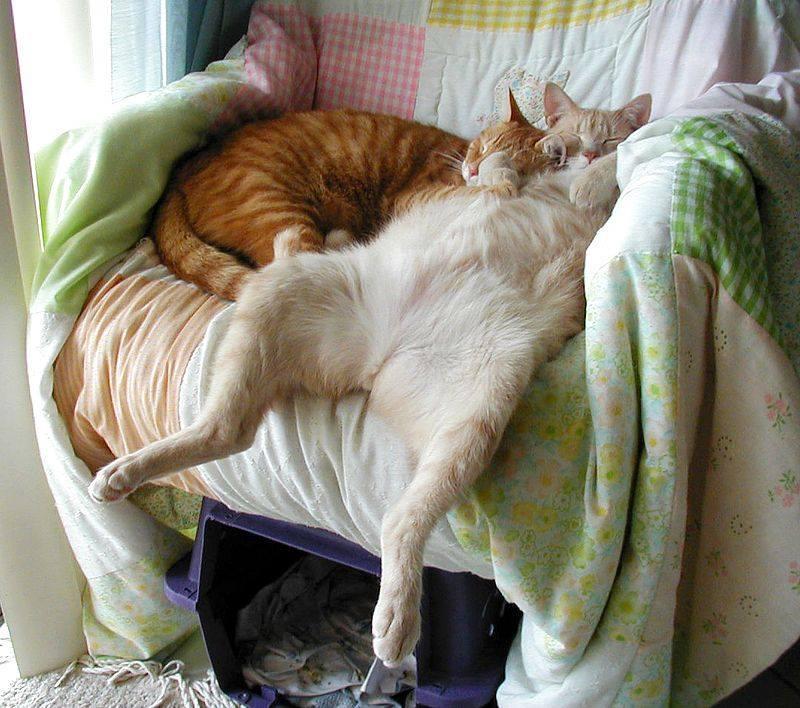 И опять про котиков - В мире животных